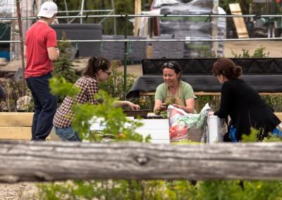 L'Atelier des potagers nordiques en cours