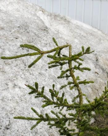 Nous pouvons aider vos plantes